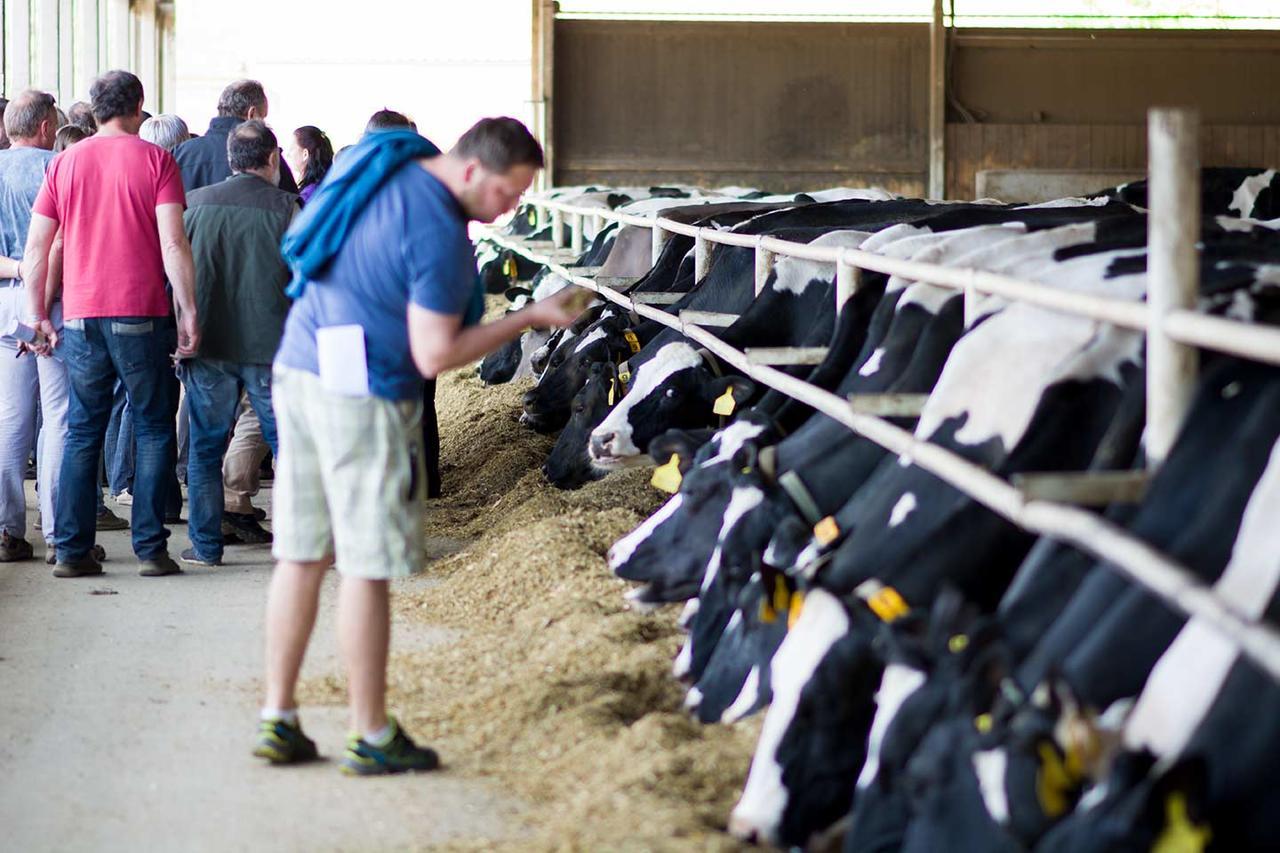 Farma Nový Dvůr produkční stáj